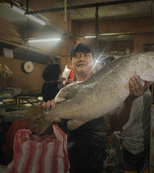 Pasar Muara Karang: Ikan Barramundi