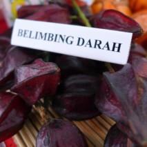 Belimbing Darah Khas Kalimantan Barat